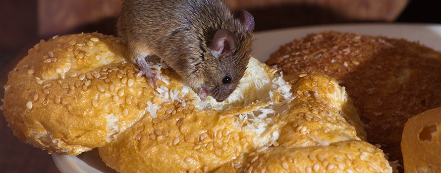 Mouse with bread